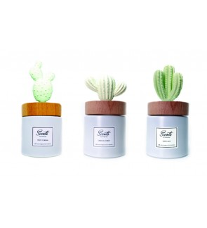 Scents 100ml Cactus Diffuser ( Buy 1 Free 1 )